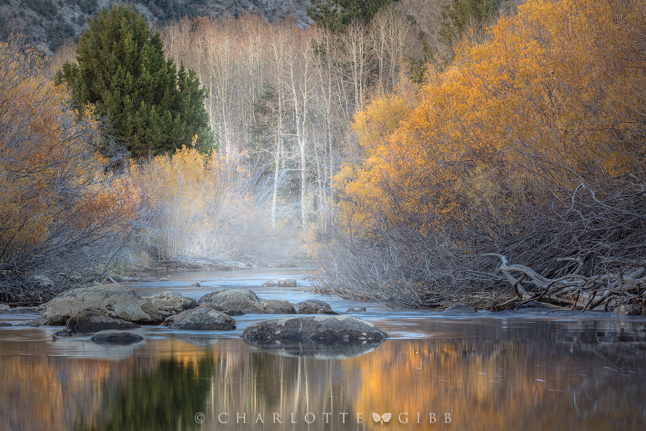Essential ideals for Better Fall Photography