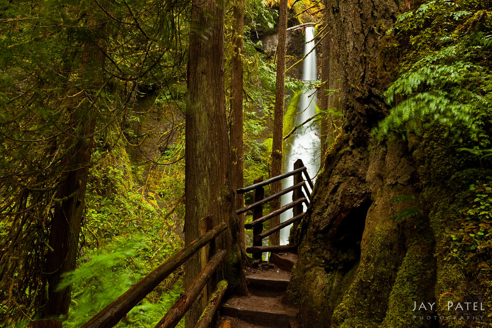 Creating leading lines using a fence in Olympic National Park, Washington