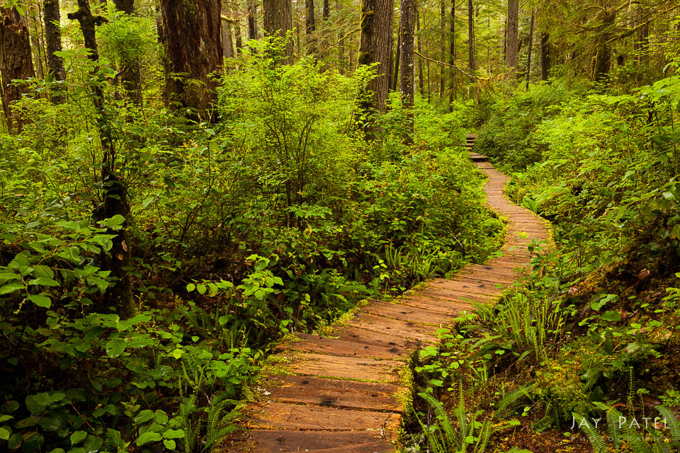 Nature photography composition using trails in Olympic National Park, Washington