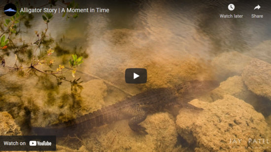 Cover for video about wildlife photography composition by Jay Patel