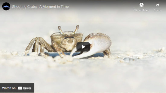 Cover for wildlife photography composition video about low perspective by Jay Patel