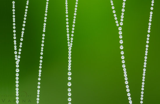 Macro photography of spider web covered in due drops from Big Island, Hawaii by Varina Patel