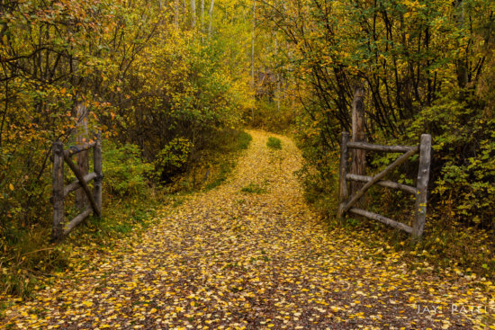 Fall Photography from Crystal Creek, Colorado by Jay Patel