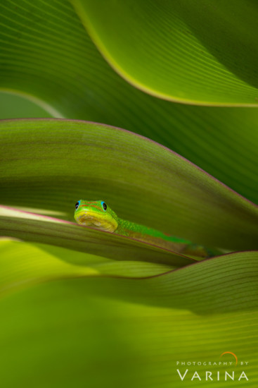 Macro Photography from Hawaii by Varina Patel