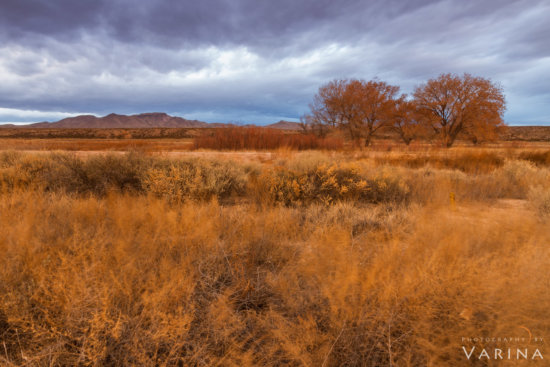 Long exposure Fall Photo from Bosque del Apache Wildlife Preserve, New Mexico by Varina Patel