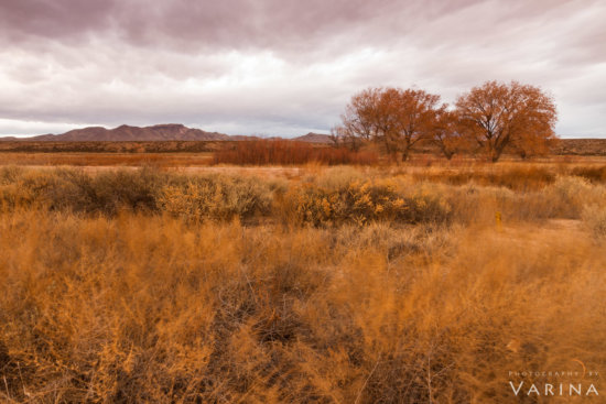 Landscape photography from Bosque del Apache Wildlife Preserve by Varina Patel