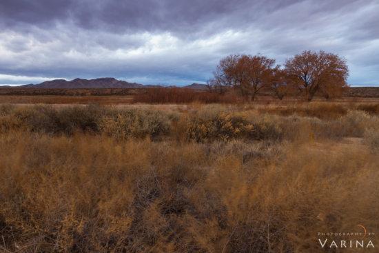 Landscape photo with White Balance: 4900K by Varina Patel