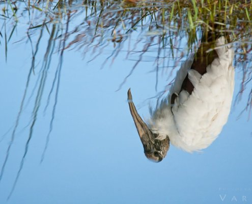 Wildlife Photography from Florida Everglades National Park by Varina Patel