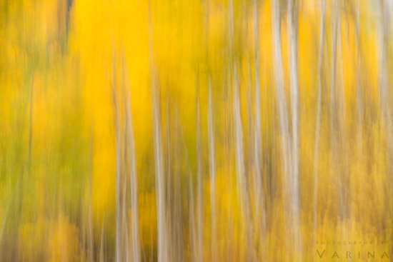 Abstract nature photo created by In-camera motion in Marble, Colorado by Varina Patel