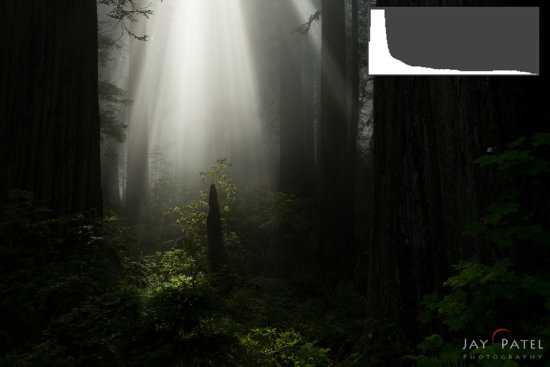Camera Exposure for Nature Photography Example of Redwood Forest National Park, California (CA), USA