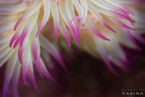 Macro photography in tide Pools, Redwood Forest National Park, California by Varina Patel