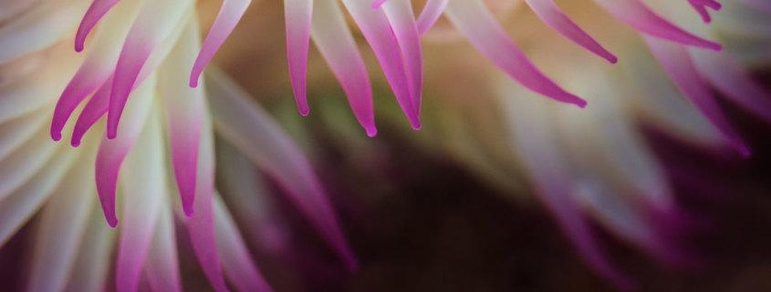 Macro photography blog cover by Varina Patel