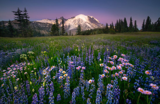 Wildflower photography at Mount Rainier National Park, Washington by Kevin McNeal