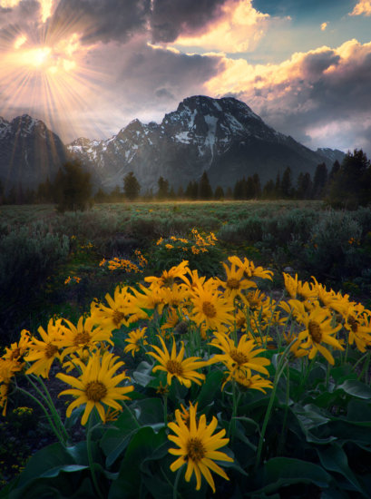 Photographing Wildflowers in spring at Grand Tetons National Park, Wyoming by Kevin McNeal