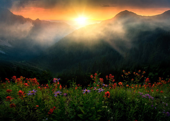 Backlit wildflowers in spring by Kevin McNeal