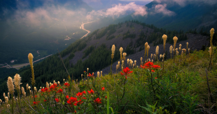 Cover for Landscape photography blog post about photographing wildflowers by Kevin McNeal