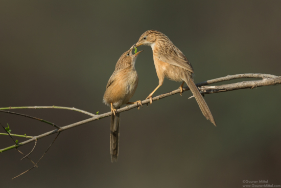 Clean background for bird photography composition by Gaurav Mittal