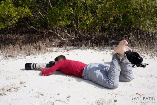 Varina Patel photography wildlife at Anne Beach, Florida