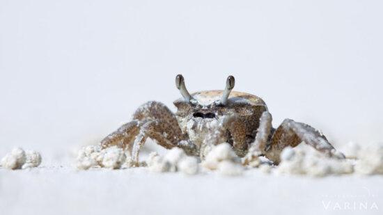 Wildlife photography at Anne's Beach, Florida by Varina Patel