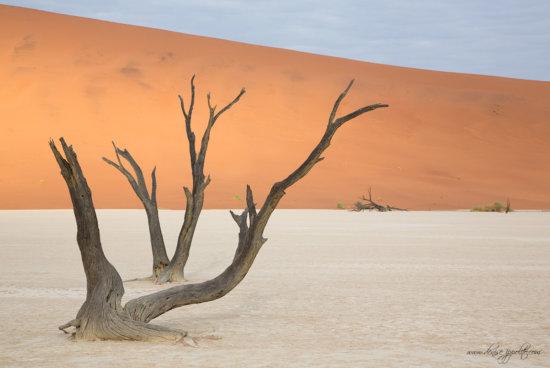 _65C0234Deadvliel,-Namibia