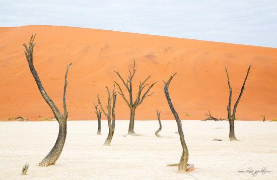 _65C0273Deadvliel,-Namibia