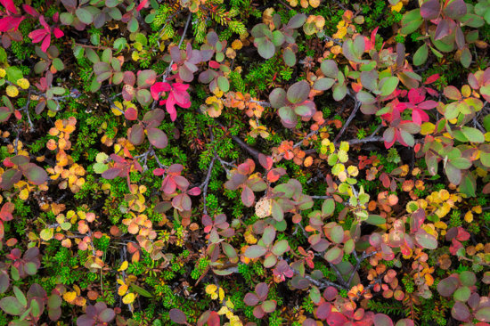Intimate landscape photography of colorful plants, Iceland by Sarah Marino