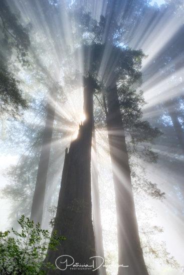 Light & fog creating light beams.
