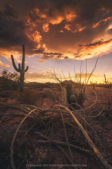 After having a storm disappear in front of us, we were still treated to a stunning sunset in the Arizona desert.