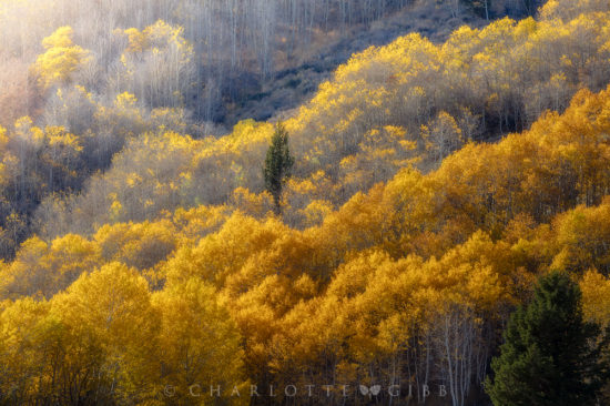 Landscape photography with fast shutter speed by Charlotte Gibb