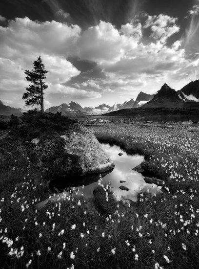 Mountains and cotton grass in Jasper National Park