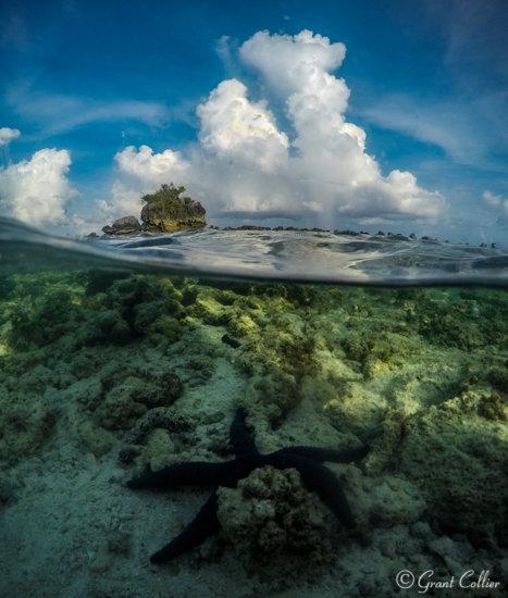Starfish, Aitutaki Lagoon