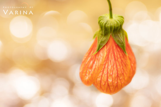 Wide Aperture to create artistic bokeh for macro subject