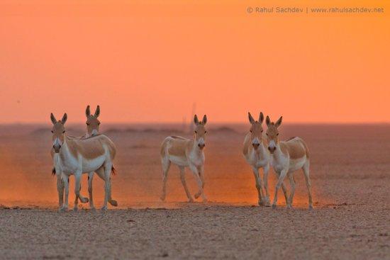 Back lit Wildlife Photography by Rahul Sachdev