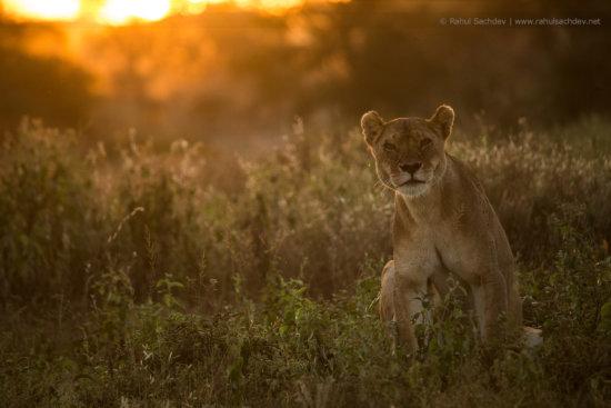 Wildlife photography by Rahul Sachdev