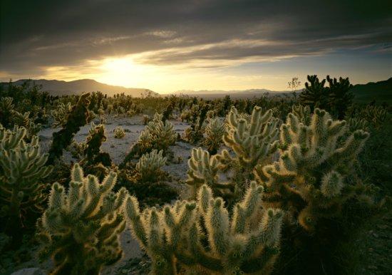 National Park Photography from Joshua Tree