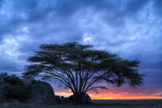 Handheld Low Light Photography of Acacia tree by Anne McKinnell
