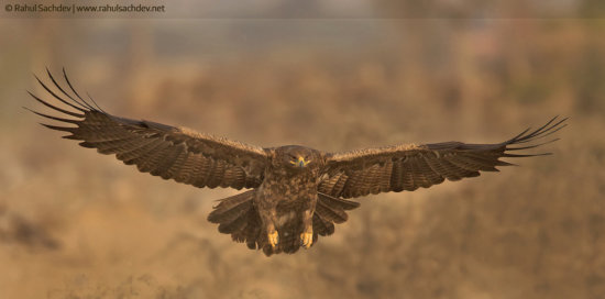 Bird photography example with background vegetation by Rahul Sachdev