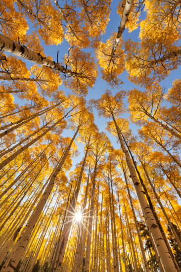 Photographing Fall Colors in Colorado by Landscape Photographer Sarah Marino