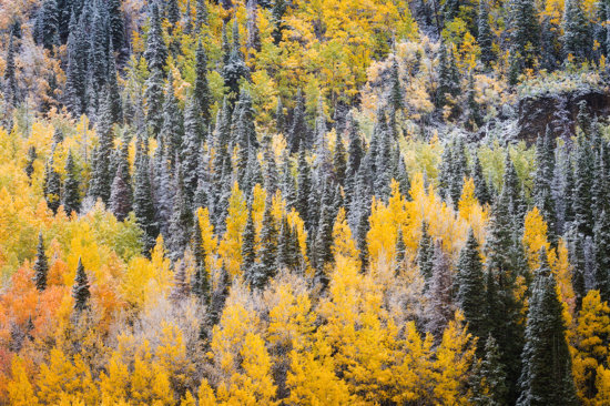 Photographing Fall Colors in Colorado