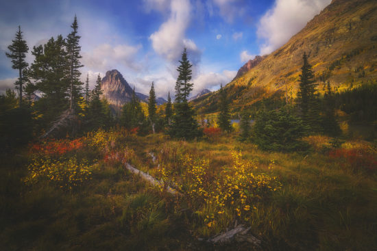 Fall colors along the banks of two medicine lake in Glacier National Park at sunrise.