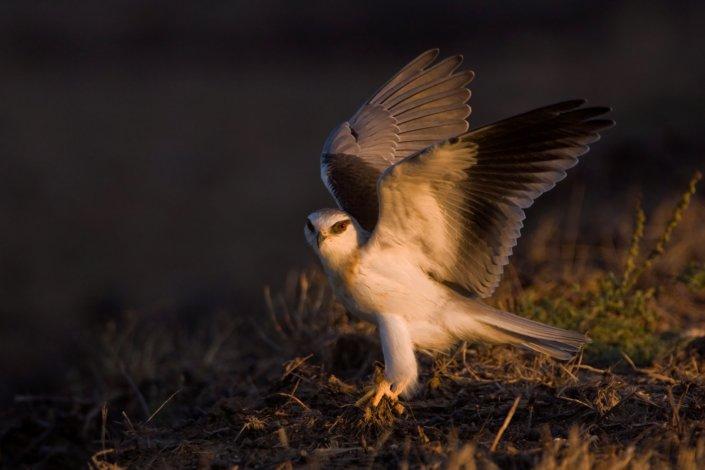 Exposing for Birds in Flight Blog Post on Bird Photography