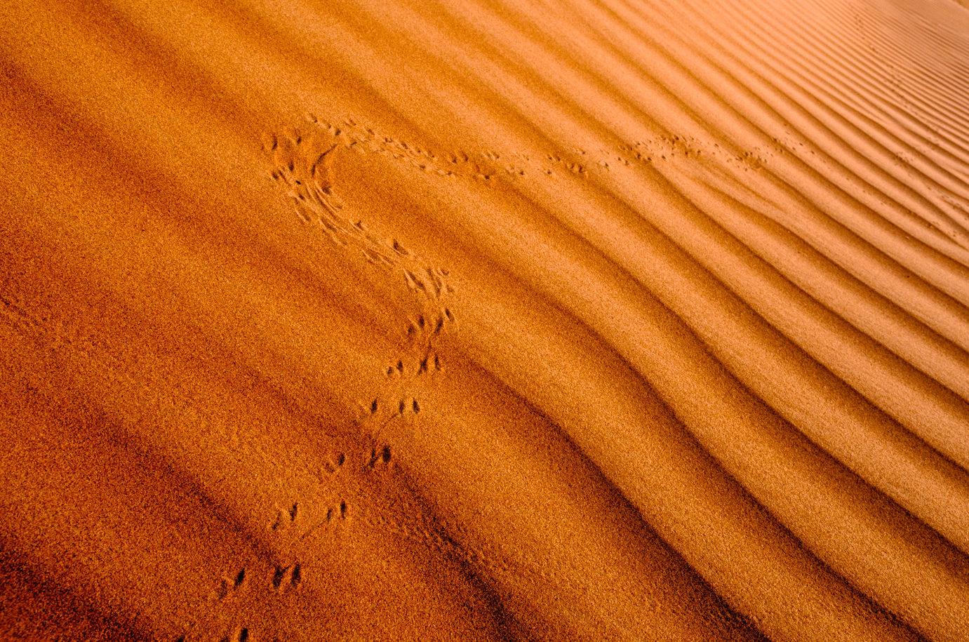 Sharqiya Sands (Wahiba Sands), Oman