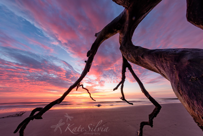 Hunting Island Sunrise by Kate Silvia