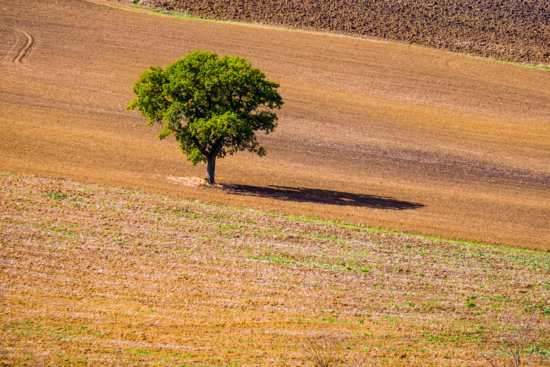 Photographing Tuscany - Lone tree, Val d'Orcia