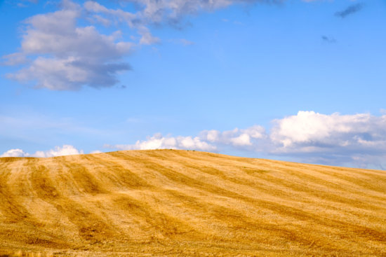 Ploughed fields, Val d'Orcia