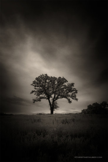 Infrared Oak Tree in Oklahoma. Release the creative block by changing your environment.
