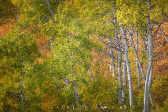 Landscape photography by Charlotte Gibb