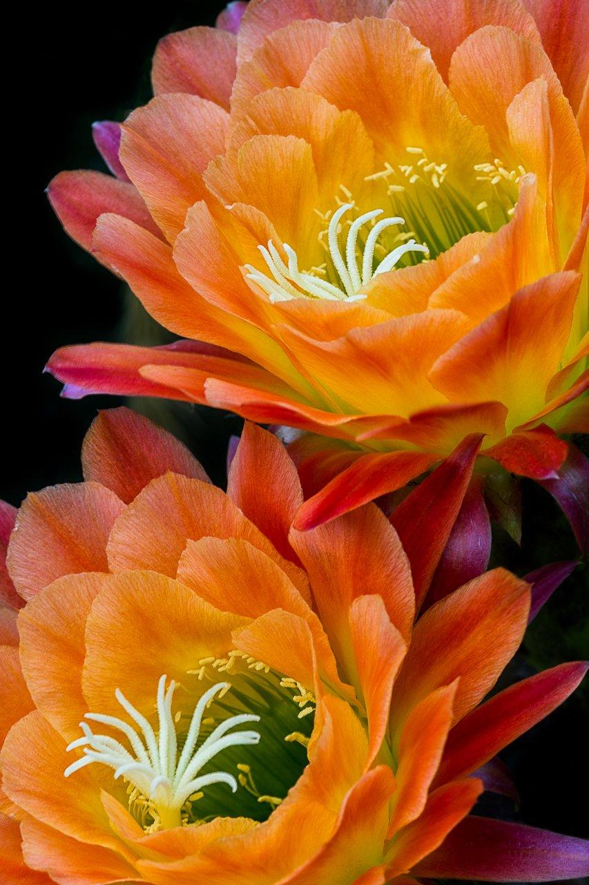 Macro Photography of Cactus