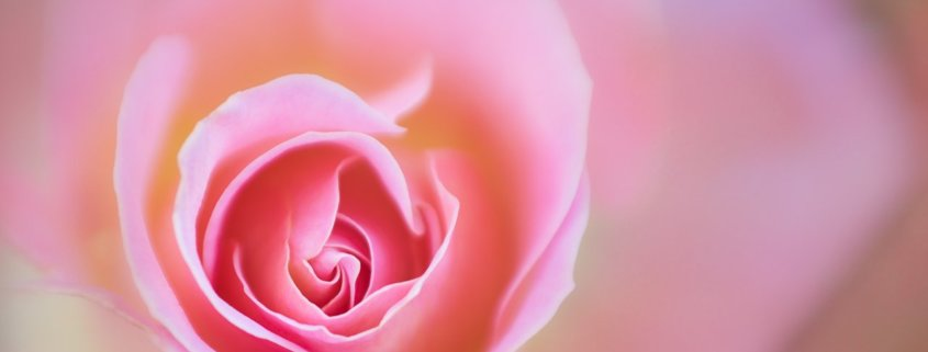 Flower Photography with Lensbaby Sweet 80 Optic by Anne Belmont
