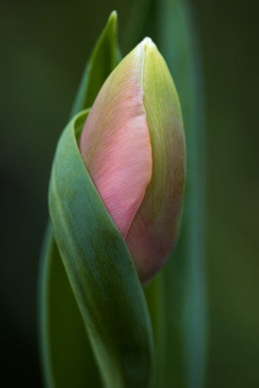 Flower Photography by Anne Belmont